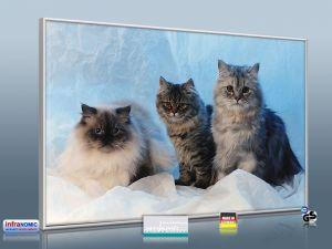 infrarot bildheizung 500 watt m10 katzen. Black Bedroom Furniture Sets. Home Design Ideas