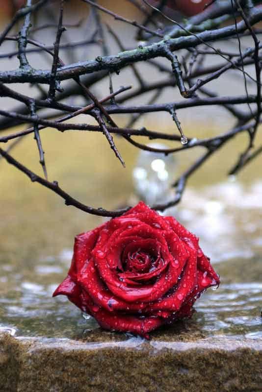 Bildheizung-Motiv Rose für Standard Infrarotheizung