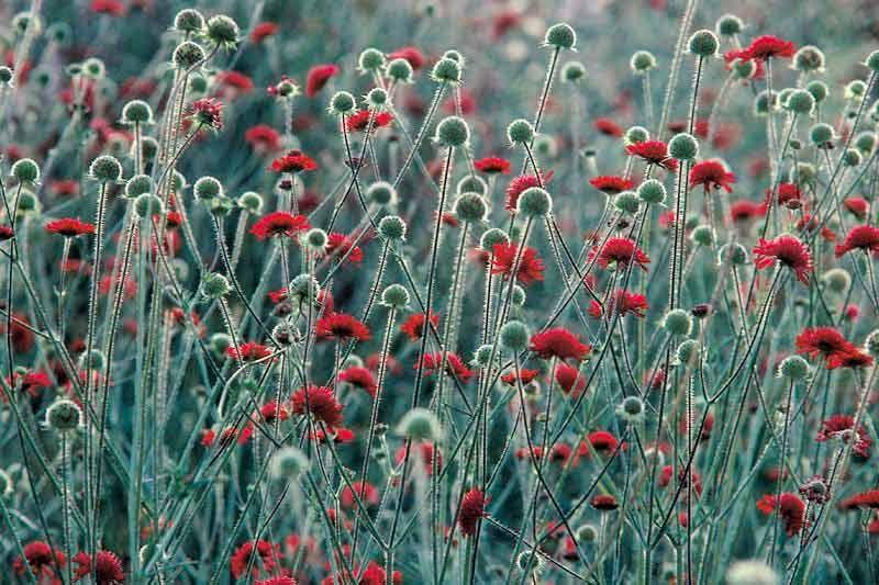 Bildheizung-Motiv Blumenwiese für Standard Infrarotheizungen