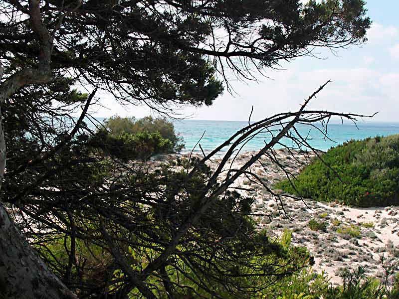 Bildheizung-Motiv Strand Mallorca für Standard Infrarotheizung