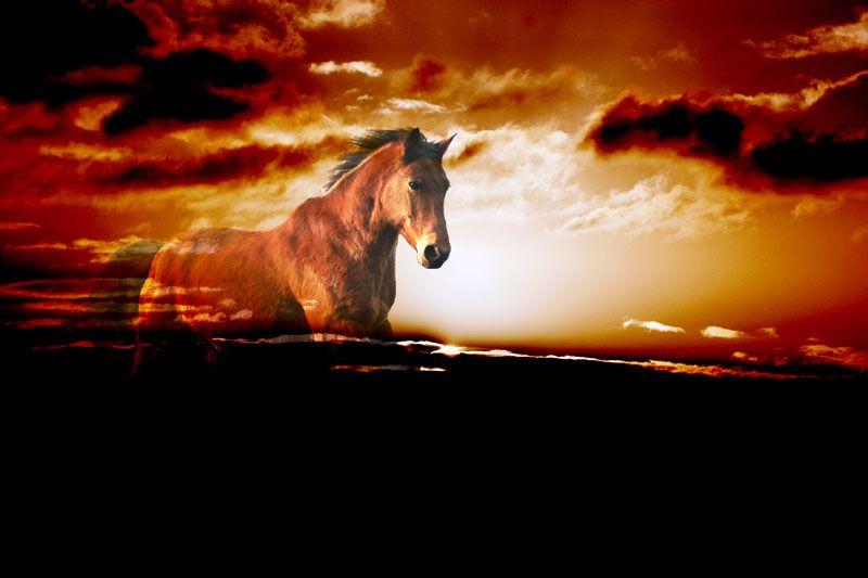 Bildheizung-Motiv Pferd für Standard Infrarotheizungen