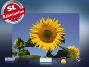 Infrarot Bildheizung 500 Watt 90x60 M10-SL Sonnenblume II