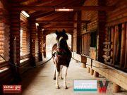 Infrarot Wärmestrahler Pferdesolarium Heizmeister Professionell IP65