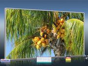 Infrarot Bildheizung 700 Watt 120x60 M10-SL Palmenfrüchte