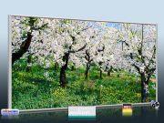 Infrarot Bildheizung Kunst 700 Watt 120x60 M10-SL Apfelblüte