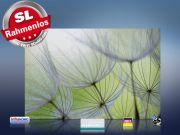 infrarot Bildheizung 500 Watt 90x60 M10-SL Pusteblumen