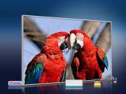infrarot Bildheizung 500 Watt 90x60 M10-SL Papageien