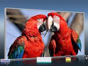 Infrarot Bildheizung 700 Watt 120x60 M10-SL Papageien