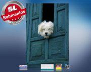 Infrarot Bildheizung 500 Watt 90x60 M10-SL Hund am Fenster