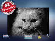 infrarotheizung mit Bild Bildheizung 500 Watt 90x60 M10-SL Katze