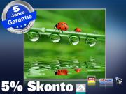 Infrarot Bildheizung 400 Watt 70x60 M10-SL Marienkäfer