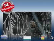 Infrarot Bildheizung 700 Watt 120x60 M10-SL Spinne