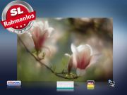 infrarot Bildheizung 500 Watt 90x60 M10-SL Magnolienblüten