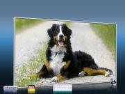 Infrarot Bildheizung 600 Watt 110x60 M10-SL Berner Sennhund