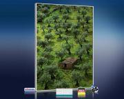 Infrarot Bildheizung 500 Watt 90x60 M10-SL Olivenbäume