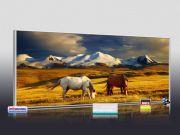 Infrarot Bildheizung 900 Watt 140x60 M10-SL Wildpferde