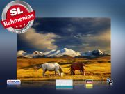 infrarot Bildheizung 500 Watt 90x60 M10-SL Wildpferde