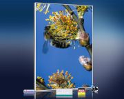 infrarot Bildheizung 500 Watt 90x60 M10-SL Biene
