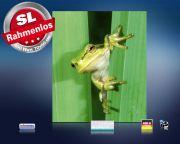 Infrarot Bildheizung 400 Watt 70x60 M10-SL Frosch