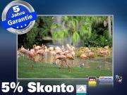 infrarotheizung mit Bild Bildheizung 500 Watt 90x60 M10-SL Flamingos