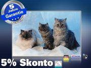 infrarotheizung mit Bild Bildheizung 500 Watt 90x60 M10-SL Katzen