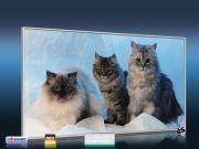 Infrarot Bildheizung 600 Watt 110x60 M10-SL Katzen