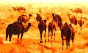 Bildheizung-Motiv Kamele für Standard Infrarotheizungen